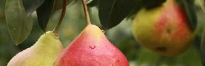 Rózsaszín gyümölcsök prosztatitisekkel